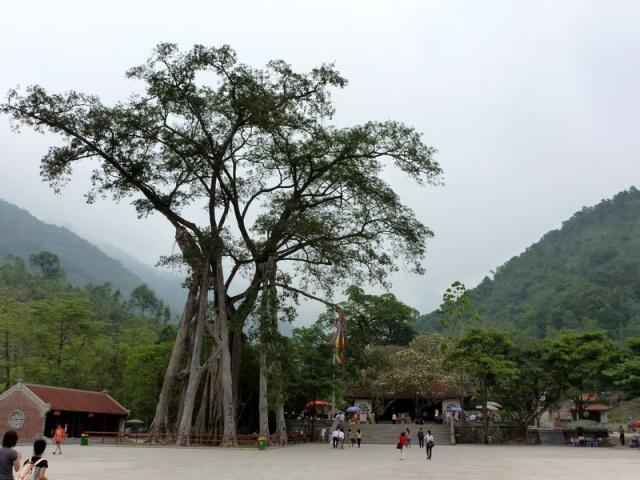 Den Thong